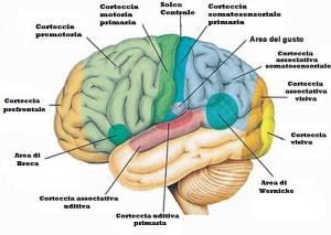 cortecce-associative
